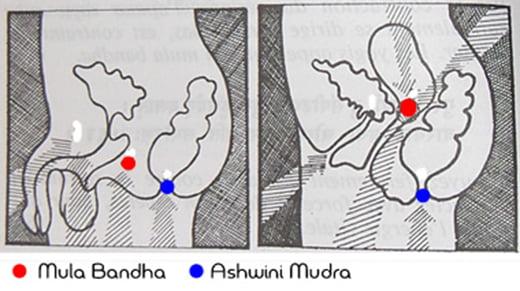 ashwini-mudra